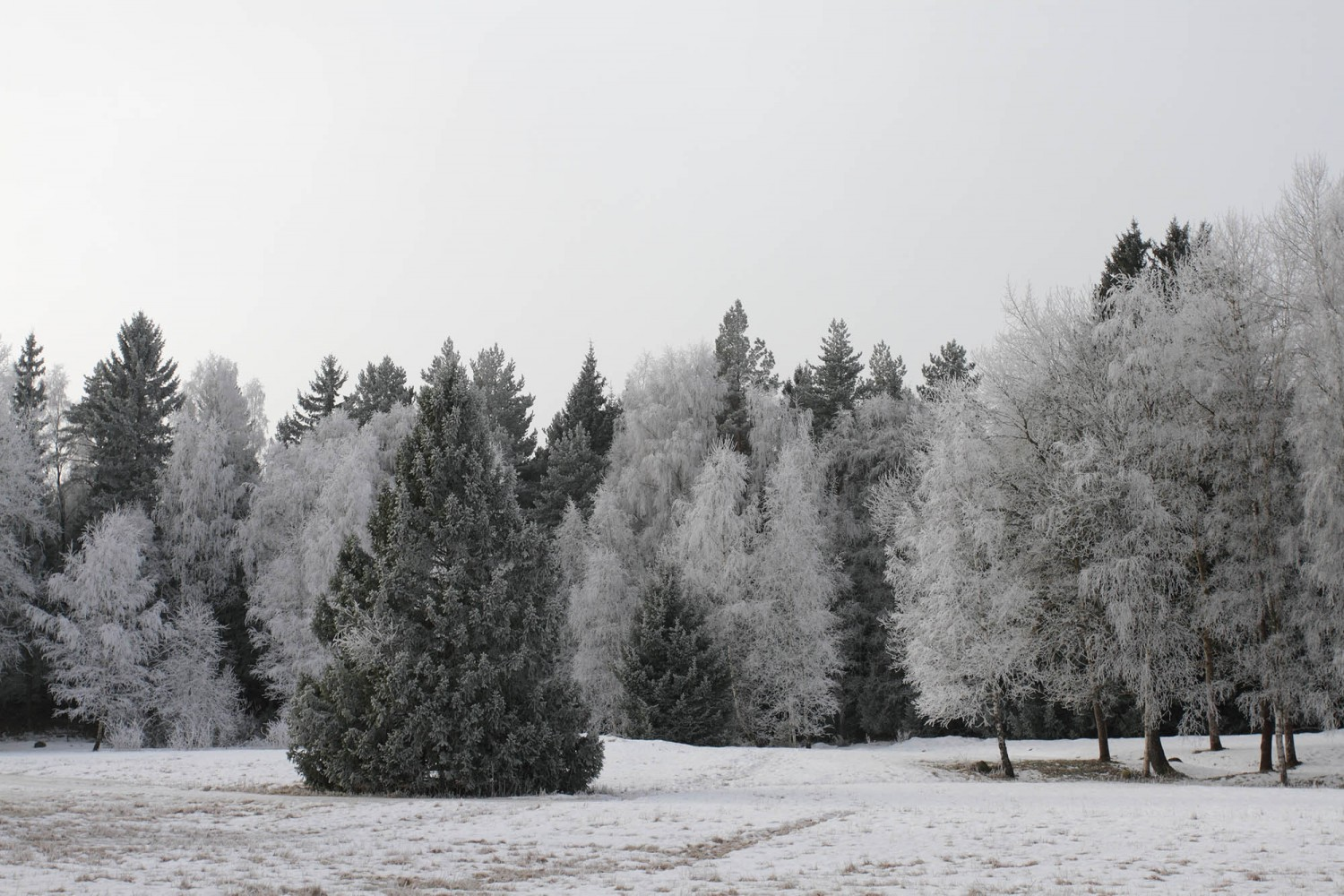 Frost_37