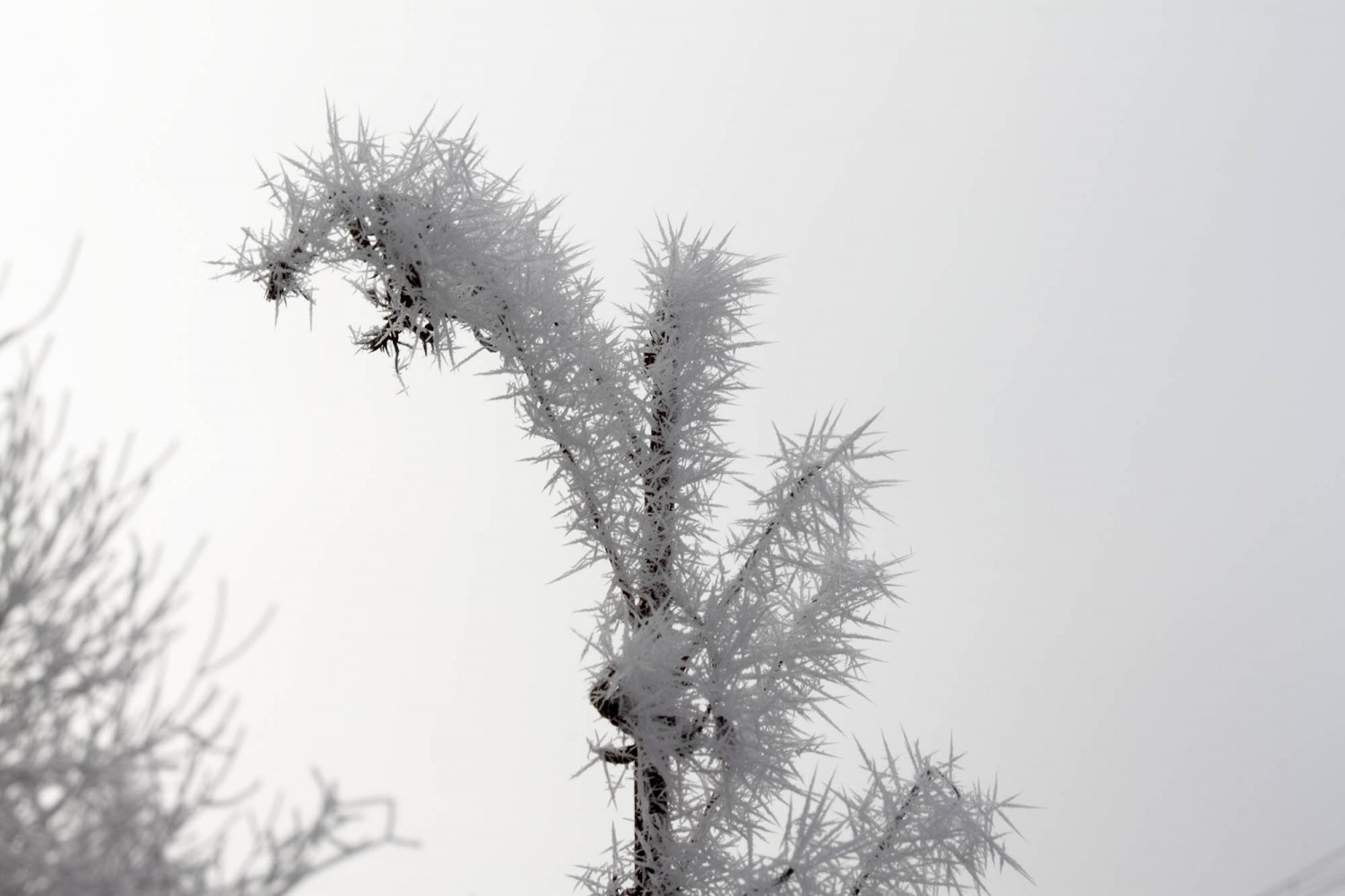 Frost_04