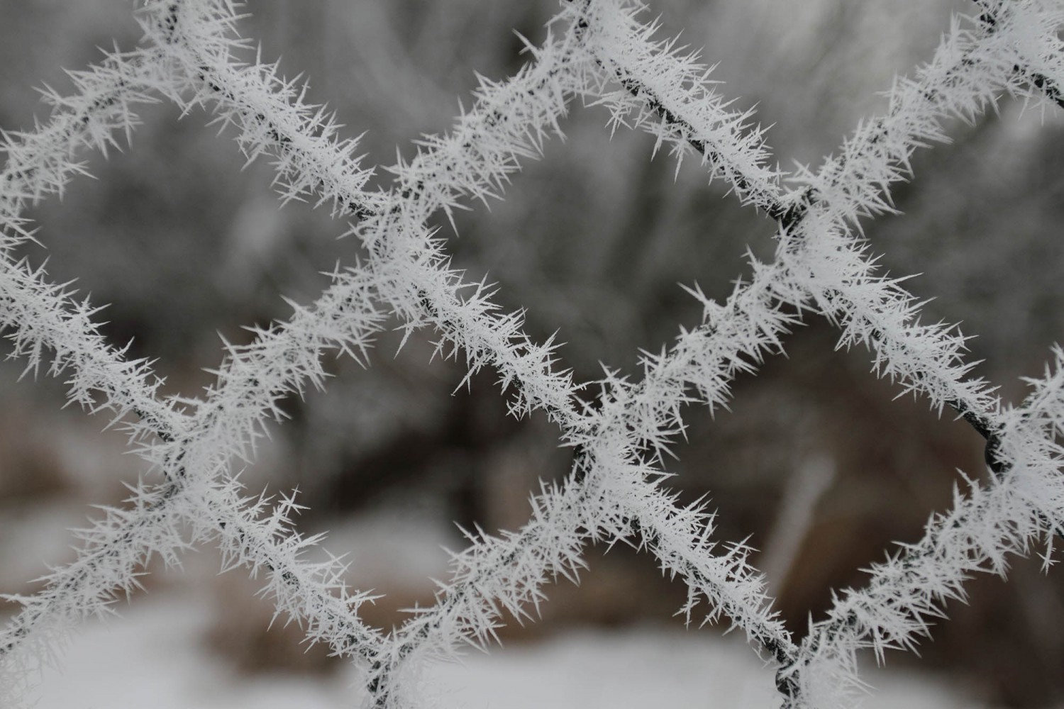 Frost_06