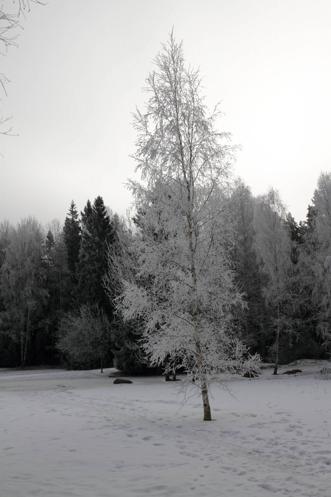 Frost_09