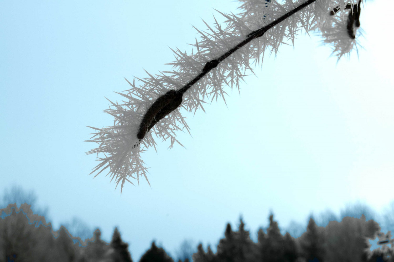 Frost_12