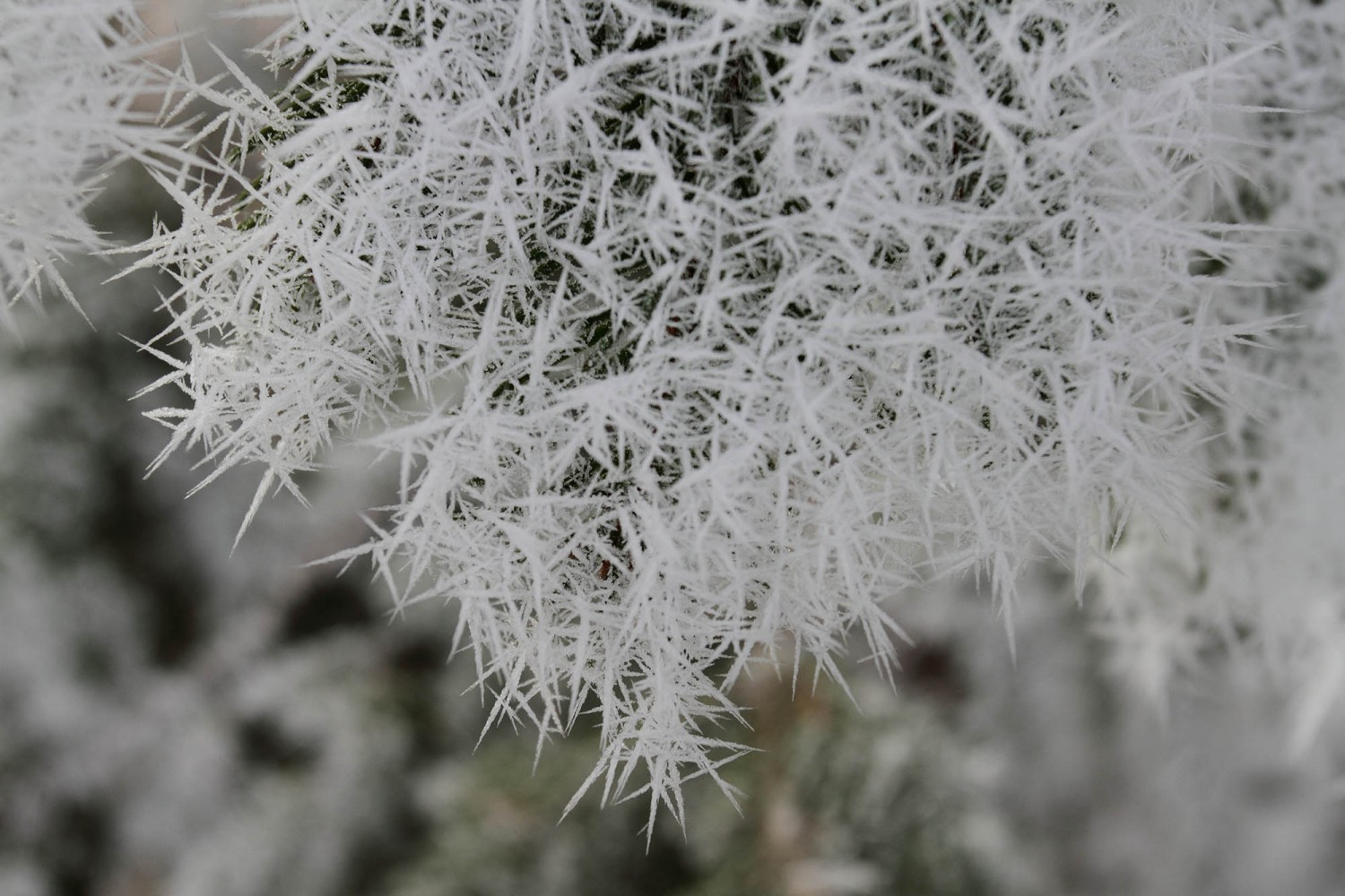 Frost_24