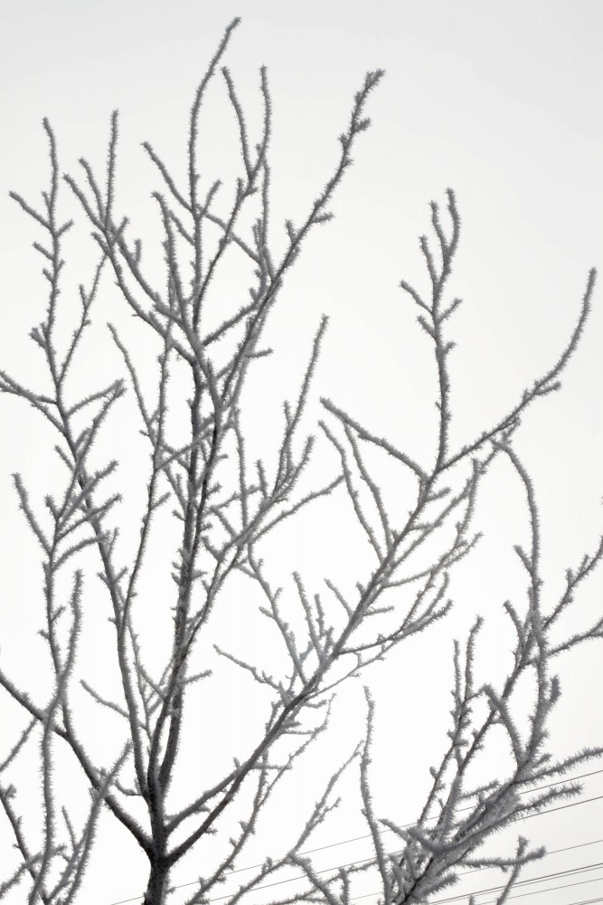 Frost_32