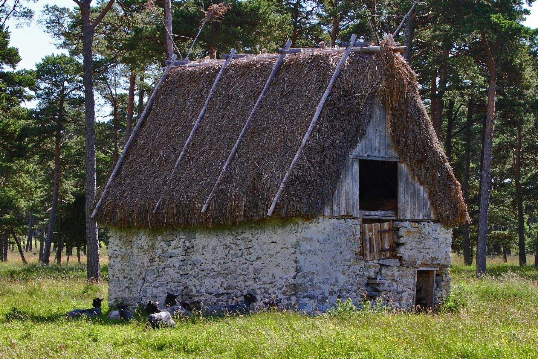 Gotland_16
