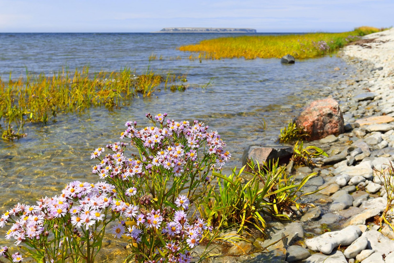 Gotland_urval_2019_02