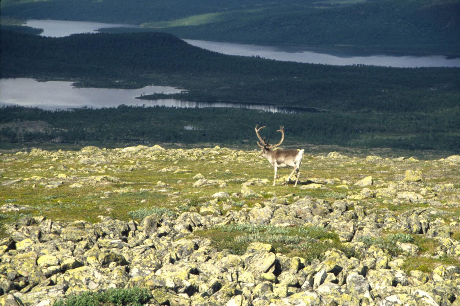 Lappland-1996_07