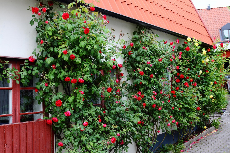 Gotland_04