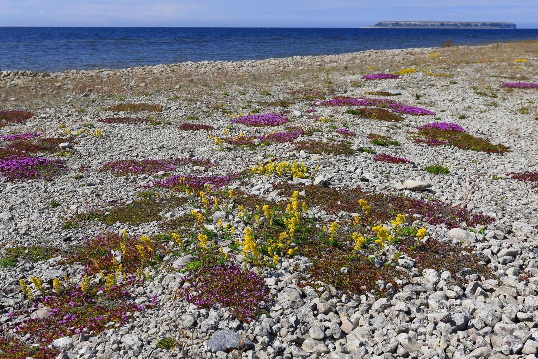 Gotland_urval_2019_01