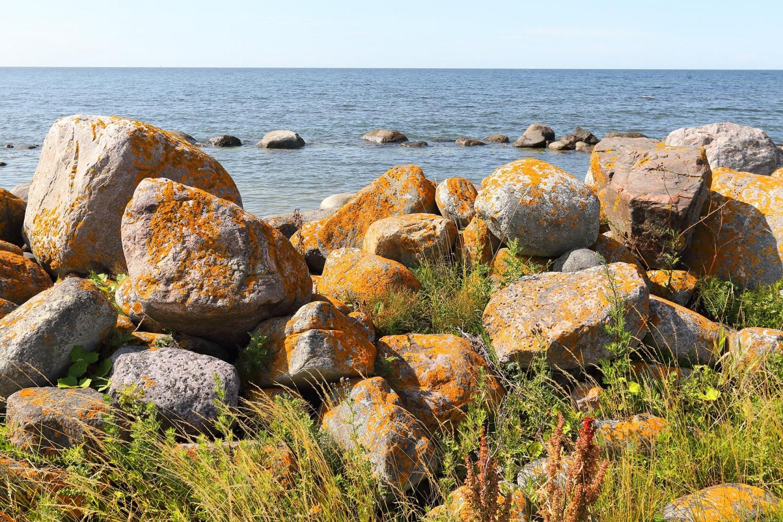 Gotland_urval_2019_23